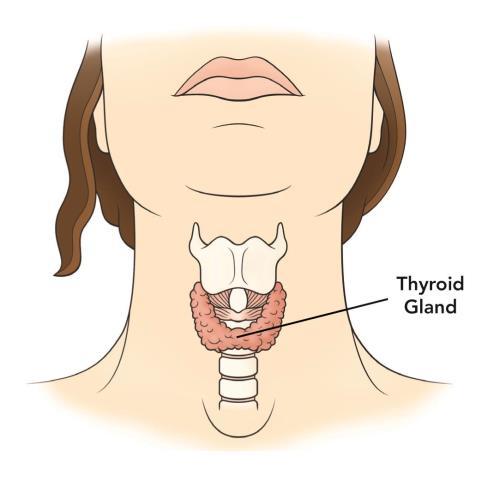 Hipertiroidismo postparto durante la lactancia materna